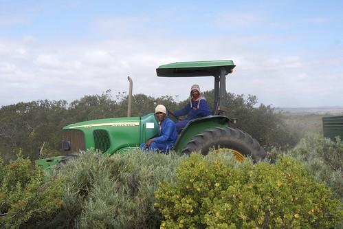 Местные трактористы попросили их сфотографировать