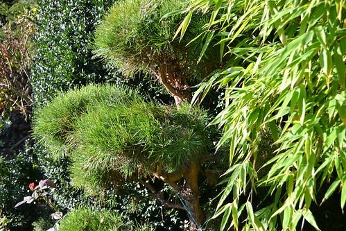 Herbstgarten 2014 Blüten und Gräser