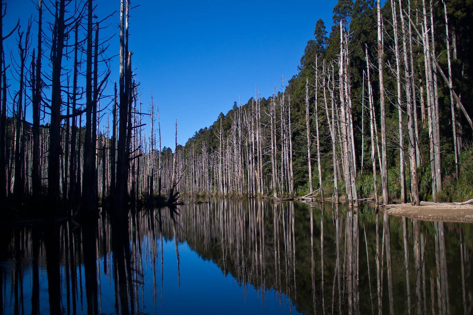 水漾經典角度,我發現大家都拍的一樣,湖面鏡像,超美的森林。