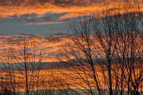 sunrise clouds trees branches pennsylvania millmont millmontpennsylvania unioncounty bonniecoatesott