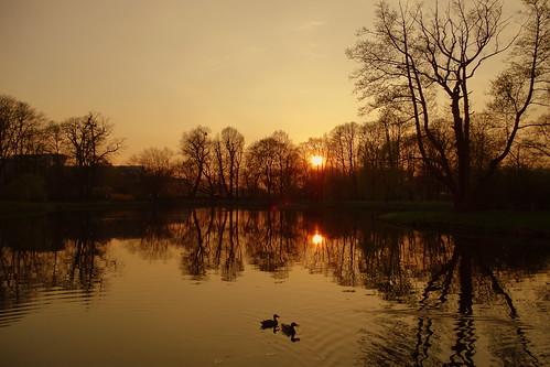 spring pond park parkjulianowski parkimamickiewiczawłodzi water reflections sunset ducks birds tree trees nature city łódź lodz polska poland