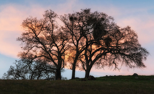 oak sunol sunolregionalwilderness rollinghills california ca sunset