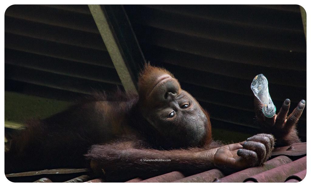 Borneo-20170413-_MG_8117