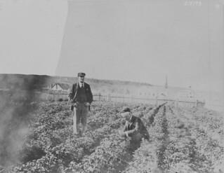 Roman Catholic mission and potato garden on the Mackenzie River, Fort Good Hope, Northwest Territories / Mission catholique romaine et jardin de pommes de terre au bord du fleuve Mackenzie, Fort Good Hope (Territoires du Nord-Ouest)