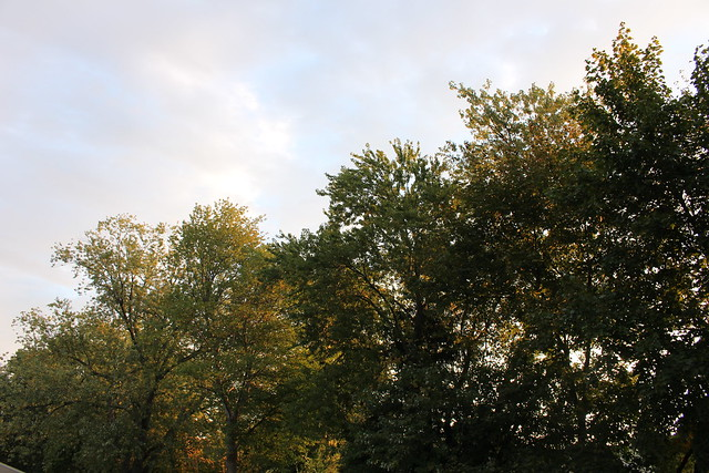 """blog series """"prints""""-fall colors in the back yard"""