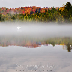 Rugg Pond Swan