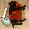 Throwback to when Hooch was a wee little nugget sleeping with his Teddy :heart:️ #tbt #throwbackthursday #hooch #teddy #teddybear #puppy #puppies #puppygram #puppybreath #cute #cutestpuppyever #adorable #snuggle #hug #germanshorthairedpointer #pointer #bi