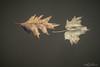 Autumn Adrift