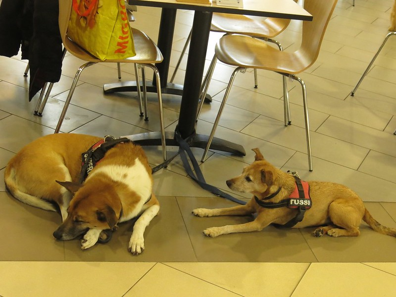 Dogs seen in Migros Restaurant, Langendorf