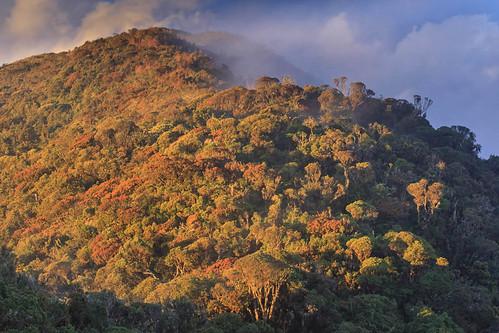 cloud forest colombia arboles paisaje bosque andes oriental neblina niebla andino cordillera antioquia subparamo abriaqui abriaquí parquenacionalnaturallasorquideas morropelao