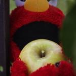 Elmo's big apple picking day!!