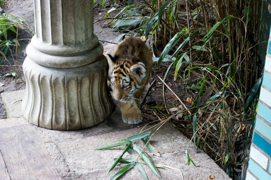 dierentuinamersfoort (9 of 1)
