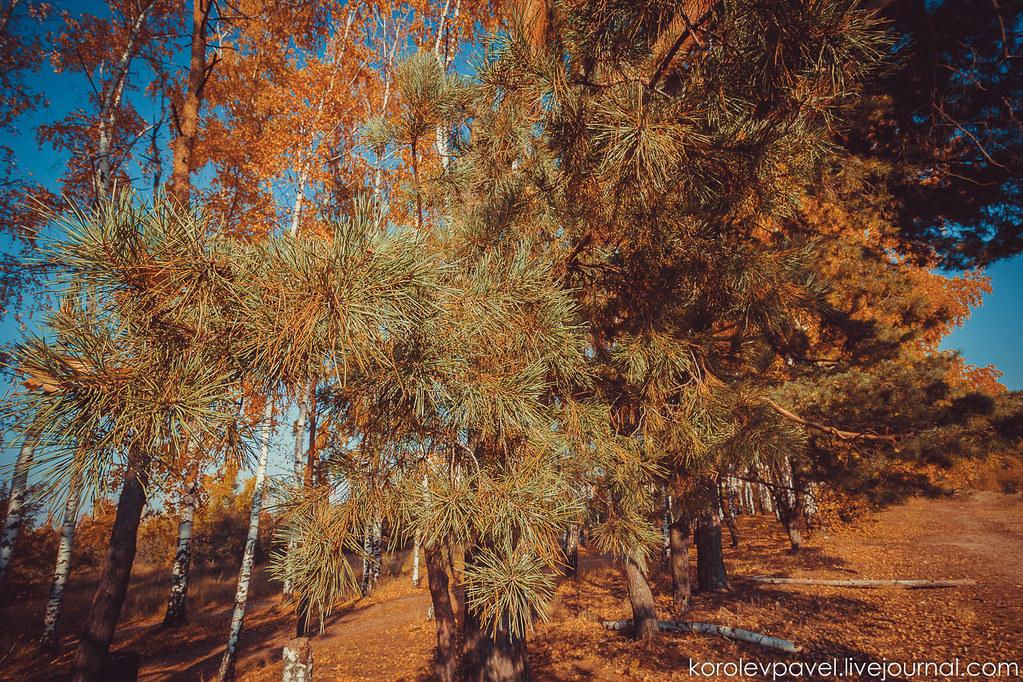 Autumn-031