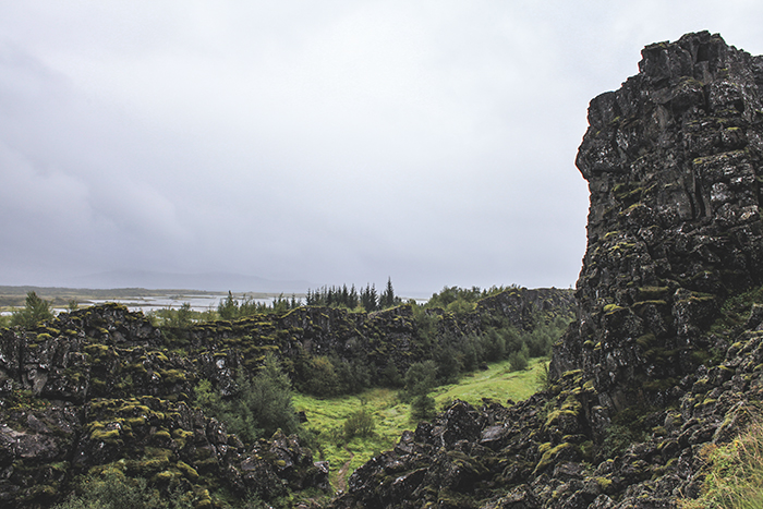 Iceland_Spiegeleule_August2014 112
