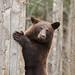 Black Bear Workshop_2014_11_32
