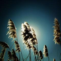Sol de Primavera  Reserva Ecológica, Buenos Aires.  #igers #igersphilia #igersbsas #igersbuenosaires #igersargentina #nature_cuties #sun #arteemfoco #buenosaires #argentina