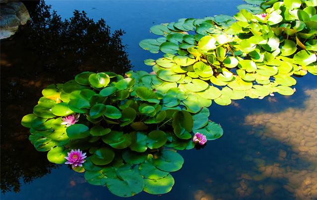 Lan Su Chinese Garden (by: Robin Wilcox, courtesy of ASLA)