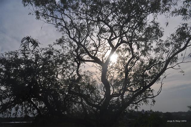 Sol abrazador