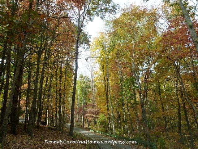 Fall Driveway 2014 2