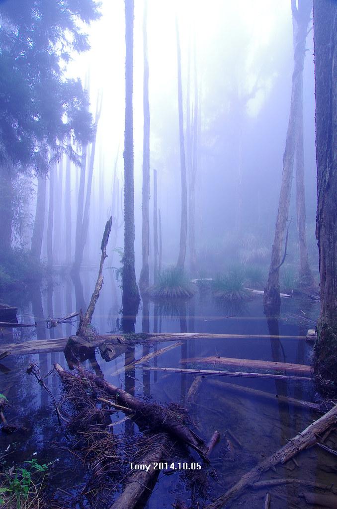 卡白牆~忘憂森林~