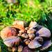 Nest of mushrooms