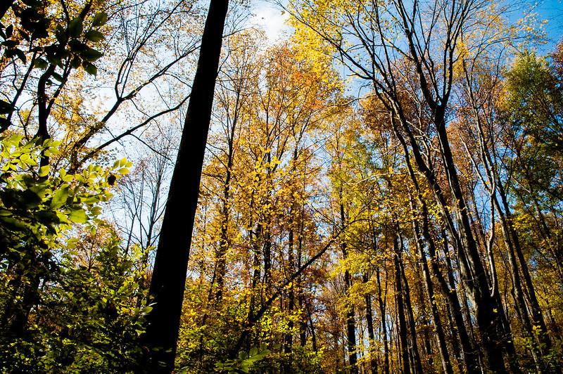 Pennywort Cliffs Nature Preserve - October 25, 2014