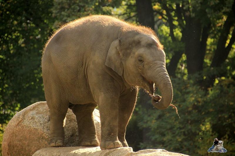 Berliner Zoo 11