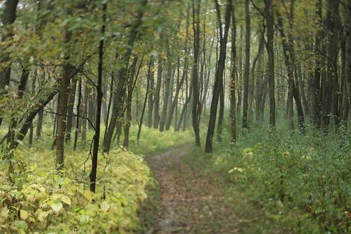 autumn fall forest illinois oak tilt virginiacreeper mackinawriver parklandsfoundation merwinpreserve