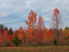 colorful treeline