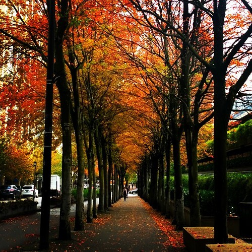 Beautiful warm Sunday morning to go for a walk in Vancouver this is by the Law Courts . #sunday #autumn #leaves #fall #colors #frenweh #wanderlust #travel #foodie #foodporn #vagabond #explorer #traveler #passport #grateful #entrepreneur #vancouver #Canada