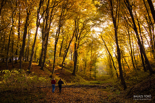 autumn people fall nature forest landscape hungary walk valley forestscape