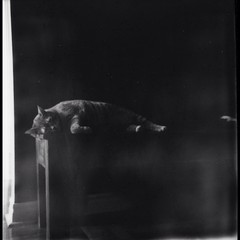 Po sleeping #polaroid #impossiblefilm
