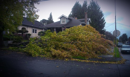 Downed tree limb down the street from my house.