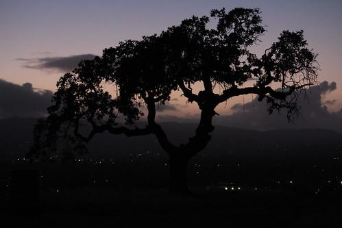 california sunset silhouette oak eastbay walnutcreek concord autofocus eiche roble fagaceae contracostacounty chêne laubbaum オーク limeridgeopenspace 橡树 橡木