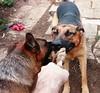 A few choice pup pics.