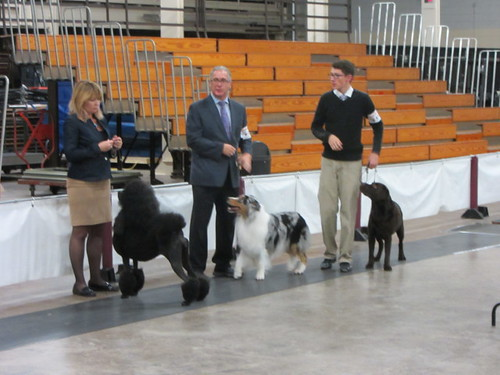 Wilson in Best of Show Competition yesterday