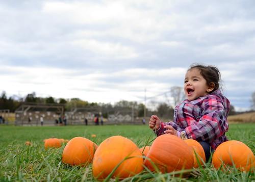 baby pumpkin harvest nikkor2485 nikond610