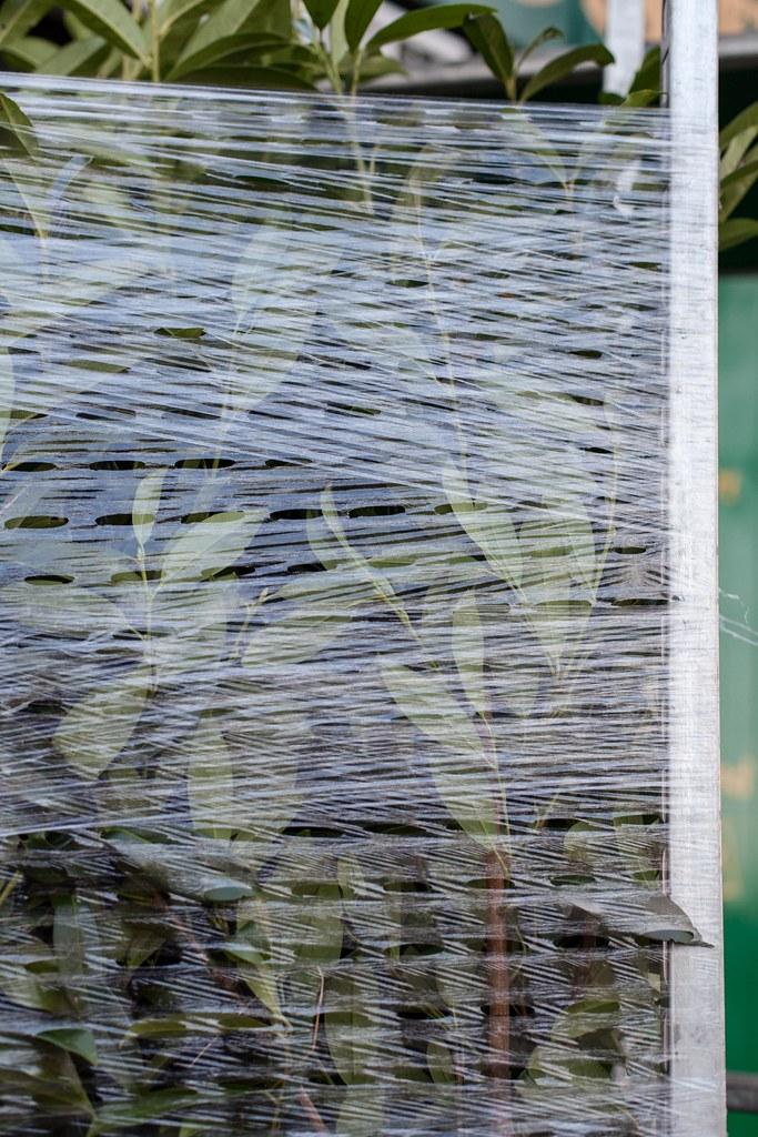 4/11/14 Nature Under Wraps