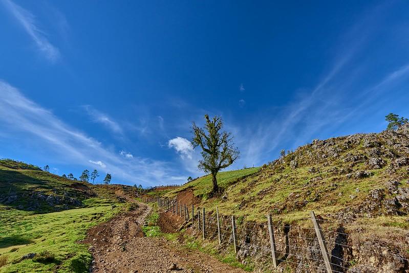 Tree and Road - Guatemala