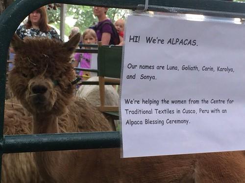 Hi! We're Alpacas.