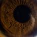 Macro Iris by Michael Maturana