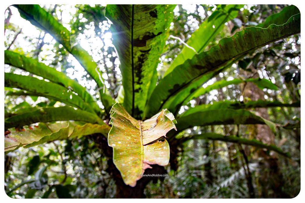 Borneo-20170409-IMG_7142