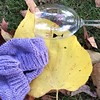 Autumn leaves plus knitting and wine are a perfect combo.  #autumn #fallleaves #50hats2014