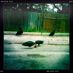 Turkey Buzzards, A Creep Fest especially for @jodi #SanAntonio