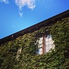 #beardedbuilding #Westport #Connecticut #CT #ivy
