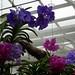 Orchideen im Schmetterlingshaus