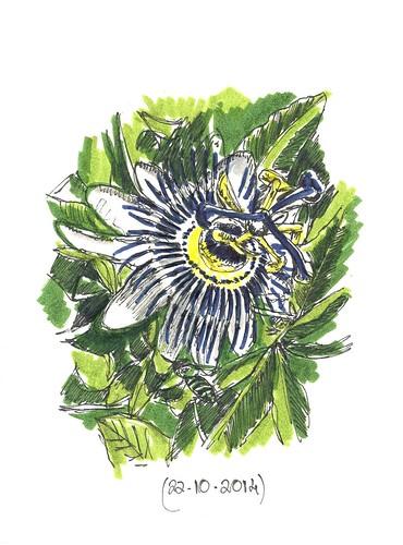 Flor de la pasión o Mburucayá (Passiflora caerulea)