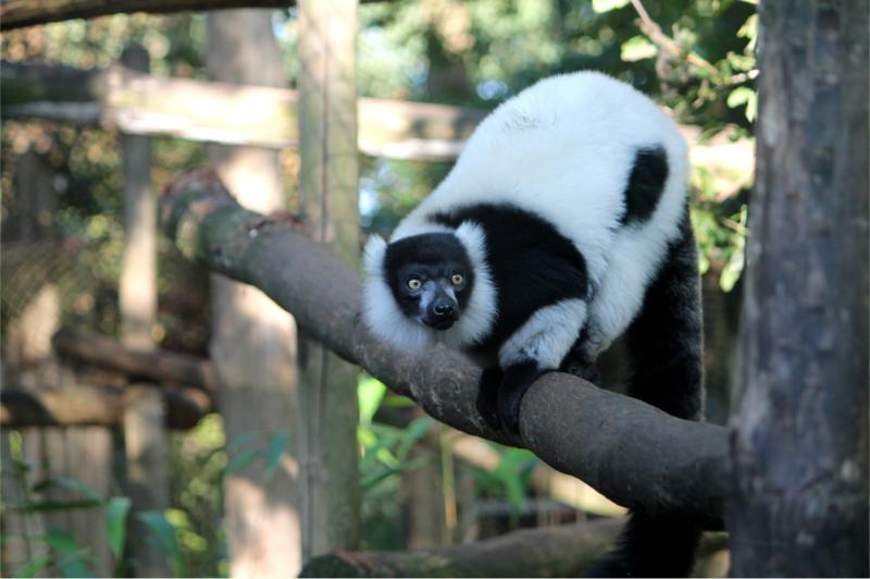 PANDA-APINA