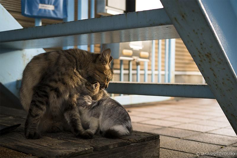 Cat Memories 2014/10/14