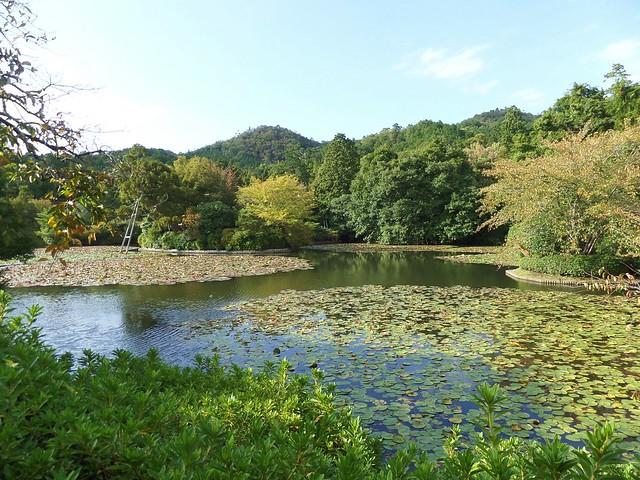 Ryoanji Temple Garden 7